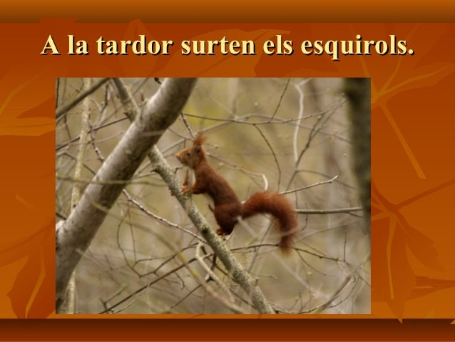 A la tardor surten els esquirols.A la tardor surten els esquirols.