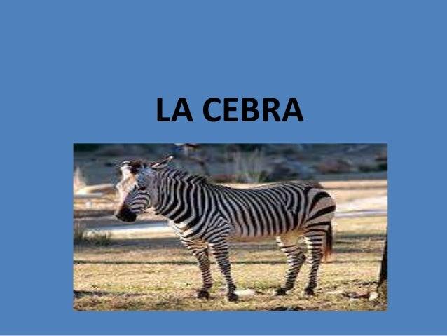 LA CEBRA
