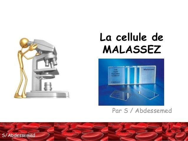 SS//AAbbddeessseemmeedd  La cellule de  MALASSEZ  Par S / Abdessemed