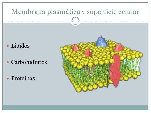sintesis de proteinas es un proceso anabolico