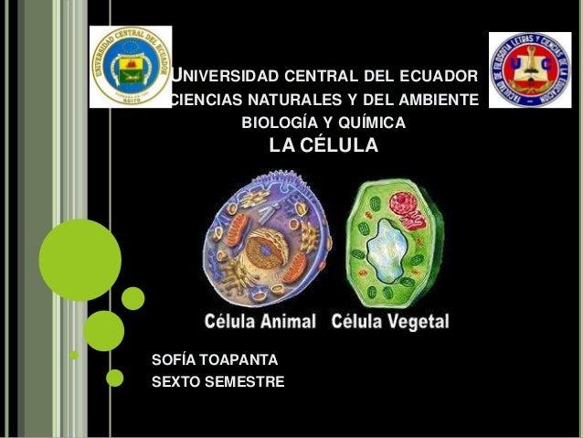 UNIVERSIDAD CENTRAL DEL ECUADOR CIENCIAS NATURALES Y DEL AMBIENTE BIOLOGÍA Y QUÍMICA  LA CÉLULA  SOFÍA TOAPANTA SEXTO SEME...