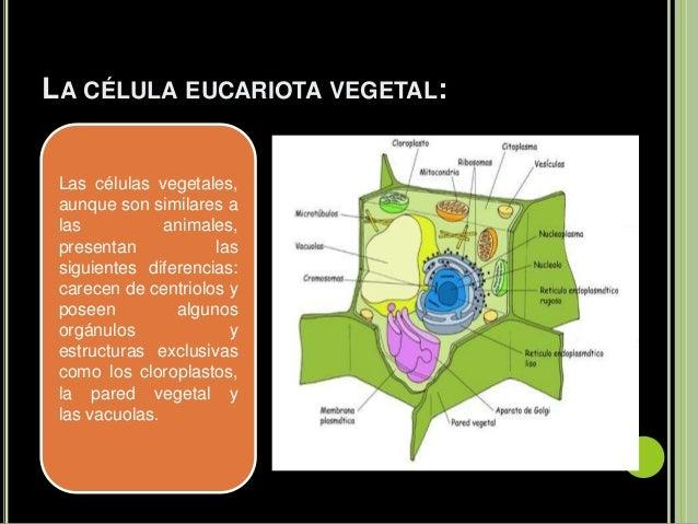 La Celula Sofía Toapanta