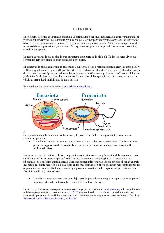 La célula y sus partes