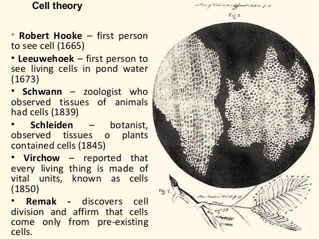 La Celula La Teoría Celular Estructura Y Función La