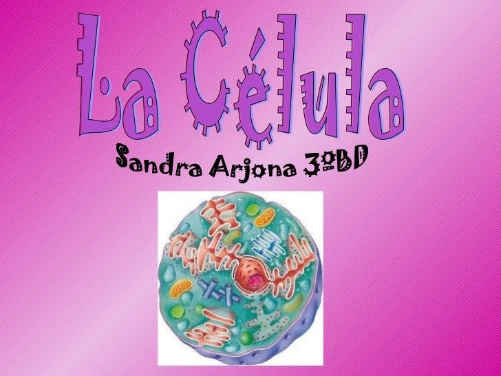 La Célula Sandra Arjona 3ºBD