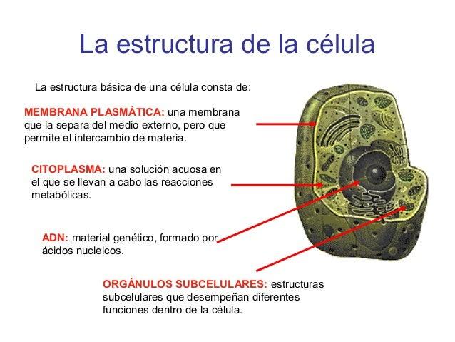 La Célula Teoria Celular