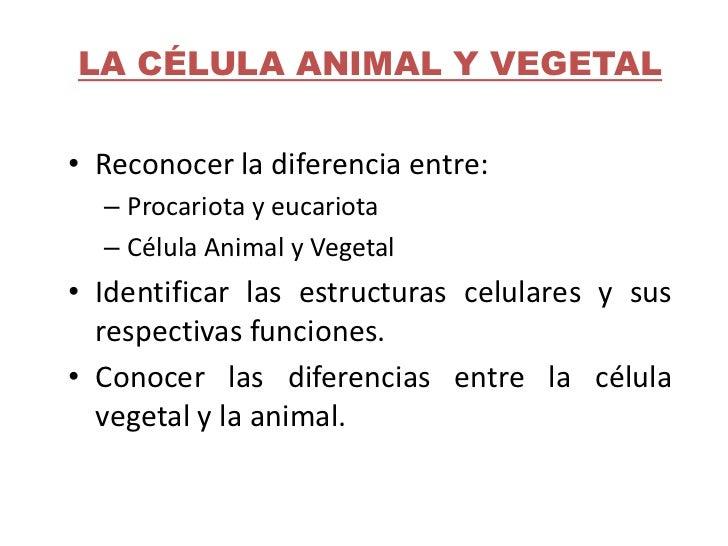 La Celula Animal Y Vegetal