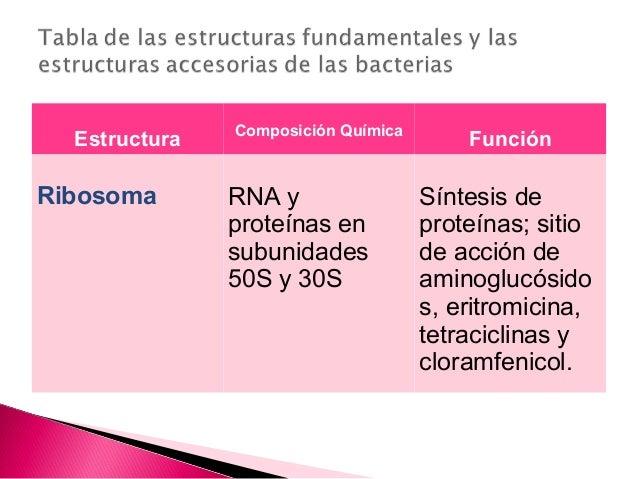 La Celula Bacteriana Y Sus Partes