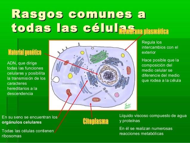 La Celula Estructura Celular 10 2
