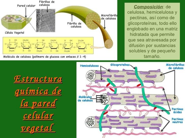 La Celula Eucariota Estructura