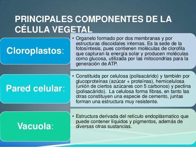 La Celula Eucariota Y Procariota 1