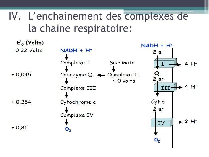 la chaine respiratoire
