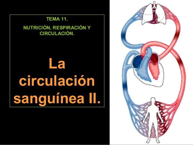 TEMA 11.  NUTRICIÓN, RESPIRACIÓN Y  CIRCULACIÓN.  La  circulación  sanguínea II.