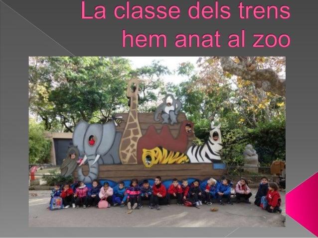 La classe dels trens hem anat al zoo