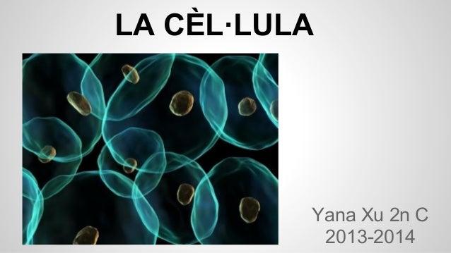 LA CÈL·LULA  Yana Xu 2n C 2013-2014