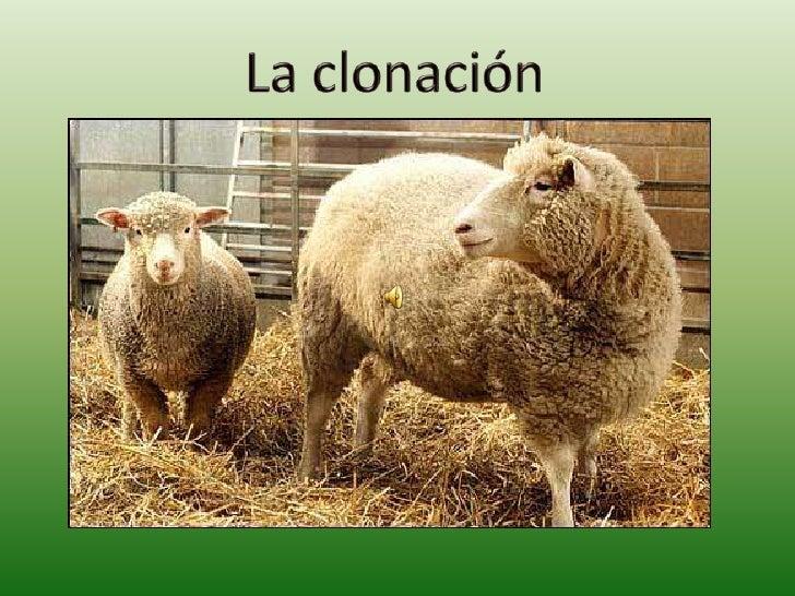 La clonación<br />
