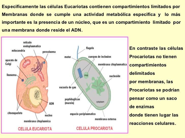 ubicacion de la celula procariota