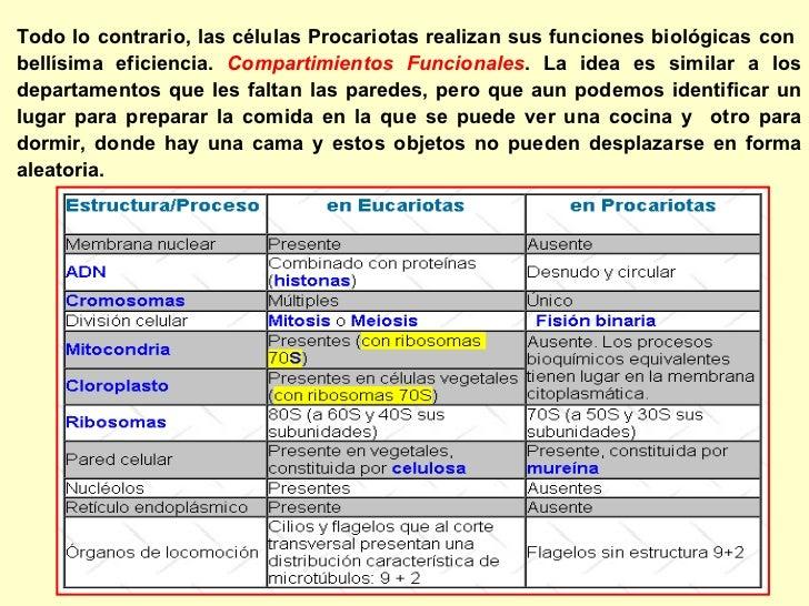 La Célula Procariota