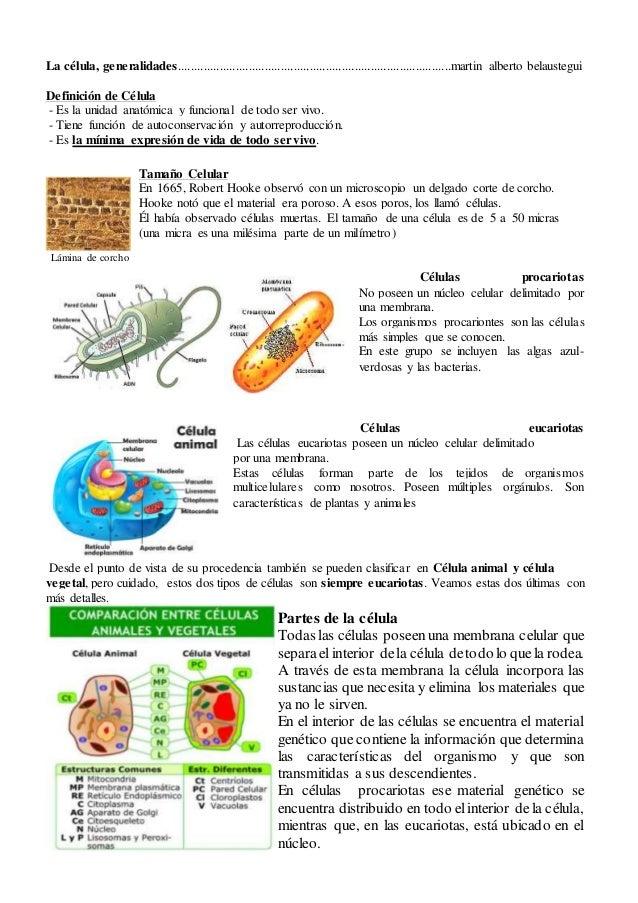 La célula, generalidades, diferencias entre célula vegetal y animal