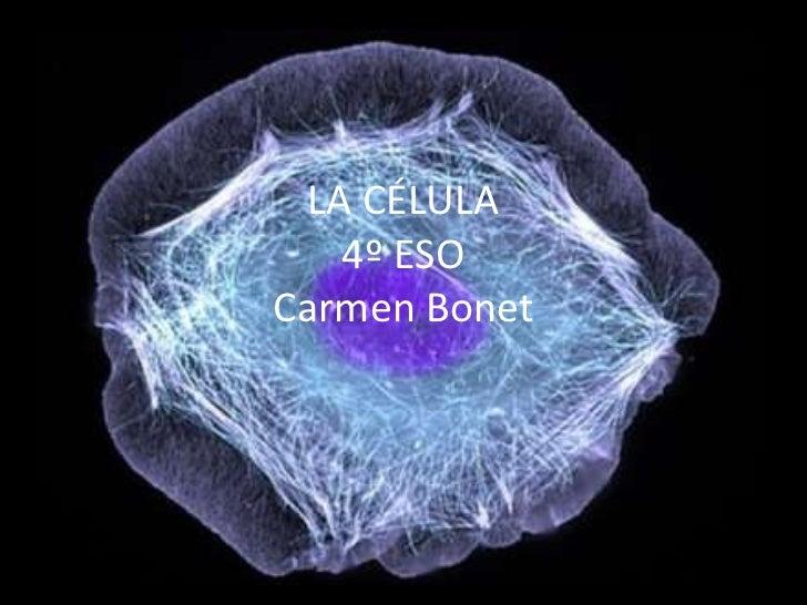 LA CÉLULA   4º ESOCarmen Bonet