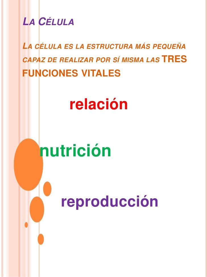 La CélulaLa célula es la estructura más pequeña capaz de realizar por sí misma las tres funciones vitales<br />relación<br...