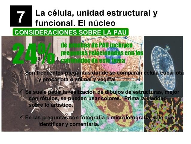 7 La célula, unidad estructural y funcional. El núcleo CONSIDERACIONES SOBRE LA PAU 24% de pruebas de PAU incluyen pregunt...