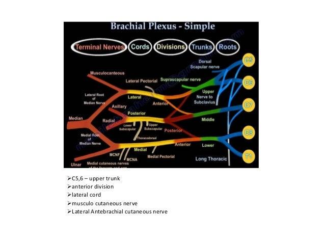 Lac mac and pac Mac Pac Wiring Diagram on cat5 wiring diagram, audiovox wiring diagram, pa wiring diagram, honeywell wiring diagram, metra wiring diagram, alpine wiring diagram, ram wiring diagram, pto wiring diagram, pre wiring diagram, cad wiring diagram, pioneer wiring diagram, pyle wiring diagram, tac wiring diagram, amp wiring diagram, cam wiring diagram, rca wiring diagram, jbl wiring diagram, car wiring diagram, pin wiring diagram, boss wiring diagram,