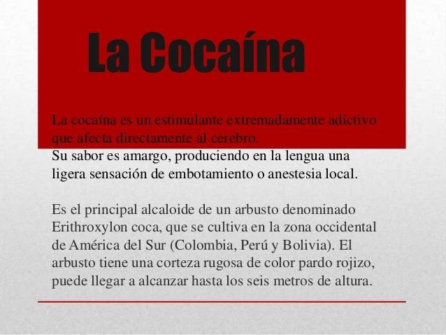 La CocaínaLa cocaína es un estimulante extremadamente adictivoque afecta directamente al cerebro.Su sabor es amargo, produ...