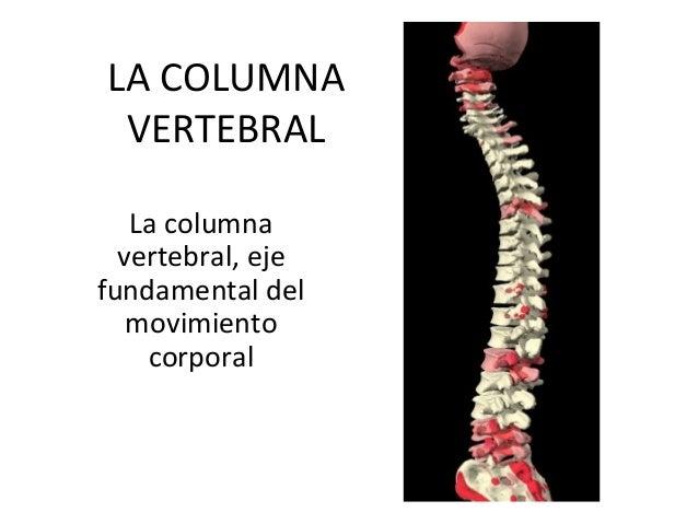 LA COLUMNA VERTEBRAL La columna vertebral, eje fundamental del movimiento corporal