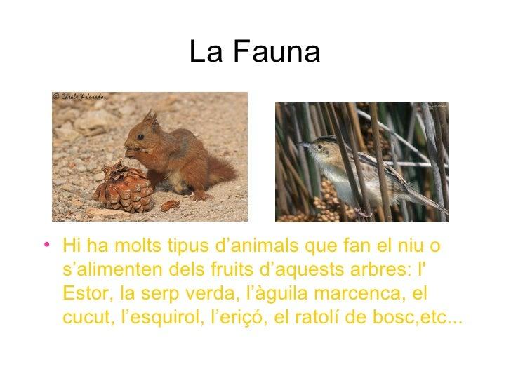 La Fauna• Hi ha molts tipus d'animals que fan el niu o  s'alimenten dels fruits d'aquests arbres: l  Estor, la serp verda,...