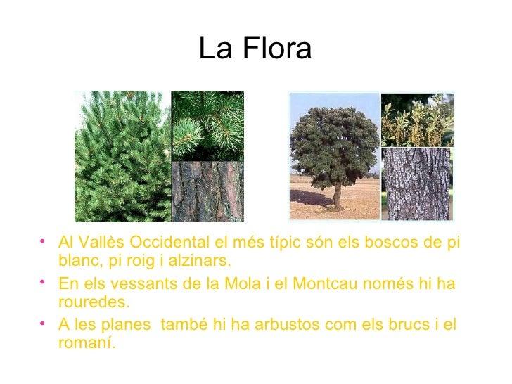 La comarca del vall s occidental - Casas en el valles occidental ...
