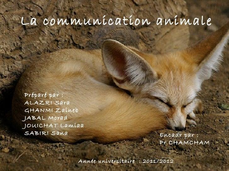 La communication animalePréparé par :ALAZRI SaraGHANMI ZainebJABAL MoradJOUICHAT LamiaaSABIRI Sana                        ...