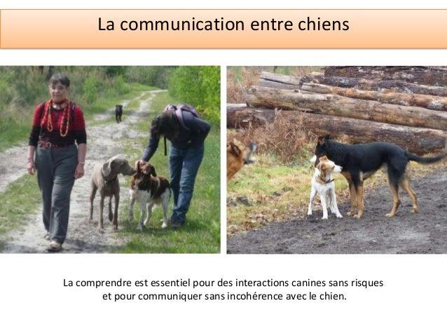 La communication canine