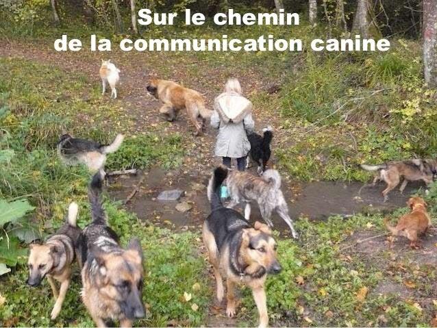 Sur le cheminde la communication canine