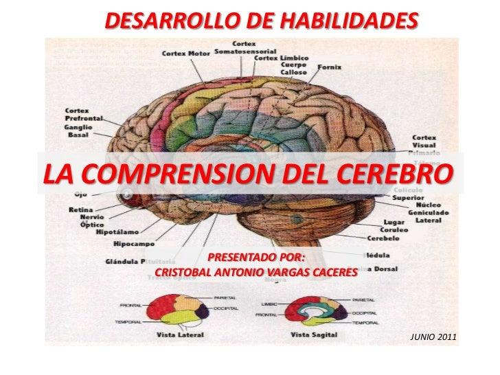 DESARROLLO DE HABILIDADES<br />LA COMPRENSION DEL CEREBRO<br />PRESENTADO POR:<br />CRISTOBAL ANTONIO VARGAS CACERES<br />...