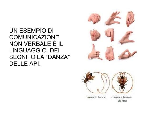 """UN ESEMPIO DI COMUNICAZIONE NON VERBALE È IL LINGUAGGIO DEI SEGNI O LA """"DANZA"""" DELLE API."""