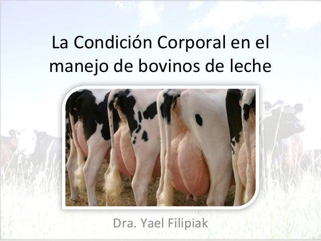 La Condición Corporal en el  manejo de bovinos de leche  Dra. Yael Filipiak