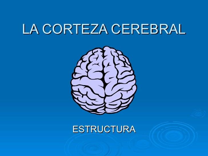 LA CORTEZA CEREBRAL          ESTRUCTURA
