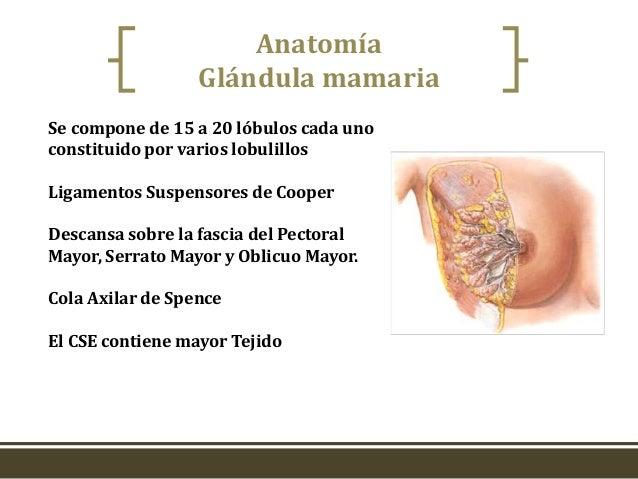 Lactancia Materna Ginecologia y Obstetricia