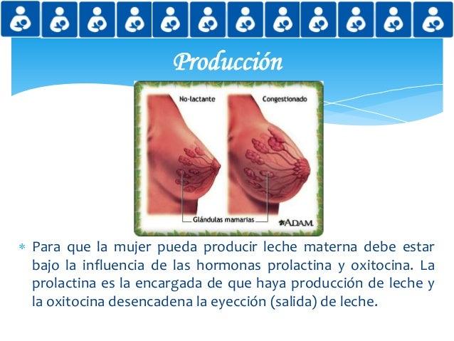 Lactancia materna y sus beneficios - Alimentos para producir leche materna ...