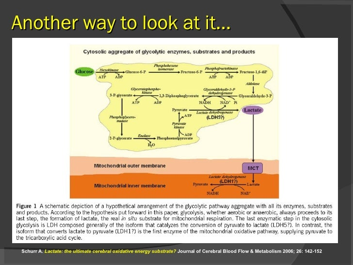 Another way to look at it… Schurr A.  Lactate: the ultimate cerebral oxidative energy substrate?  Journal of Cerebral Bloo...