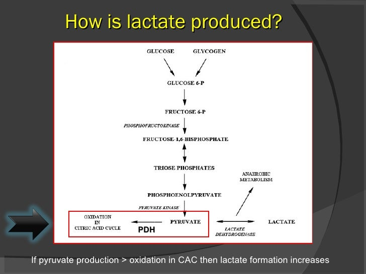How is lactate produced? If pyruvate production > oxidation in CAC then lactate formation increases PDH