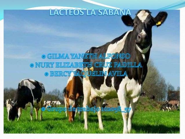 PLANTEAMIENTODEL PROBLEMA:Crear una empresa productora y transportadora de leche que permitaque los productores del munici...