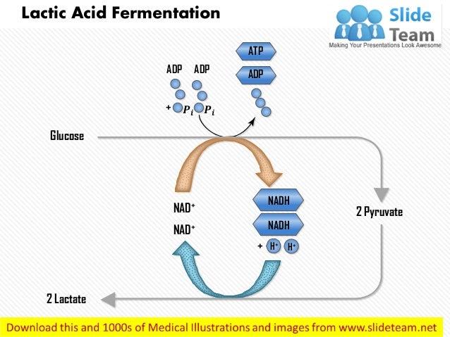 Production of lactic acid by fermentation pdf