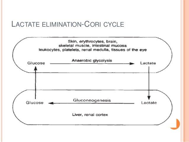 LACTATE ELIMINATION-CORI CYCLE