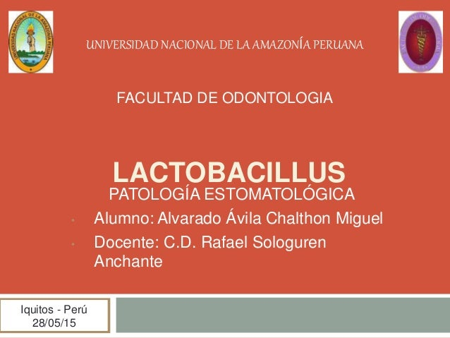 LACTOBACILLUS PATOLOGÍA ESTOMATOLÓGICA • Alumno: Alvarado Ávila Chalthon Miguel • Docente: C.D. Rafael Sologuren Anchante ...