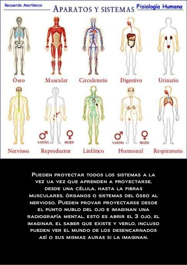 Lujoso Imaginar La Anatomía Humana Imagen - Imágenes de Anatomía ...