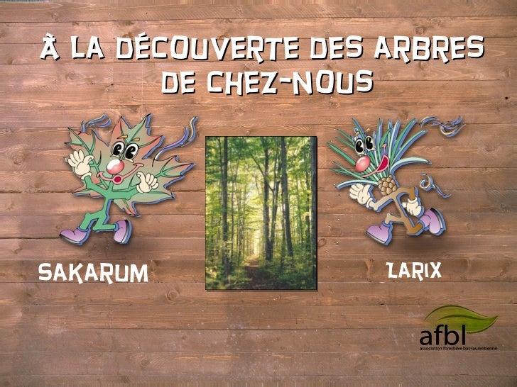 À la découverte des arbres  de chez-nous Sakarum Larix  boisdelaquerre