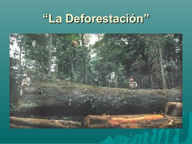 """""""""""La Deforestación""""La Deforestación"""""""