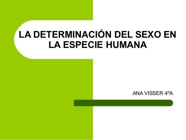LA DETERMINACIÓN DEL SEXO EN LA ESPECIE HUMANA ANA VISSER 4ºA